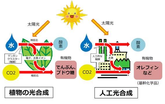 植物の光合成と人工光合成のプロセスをそれぞれ図であらわしています。